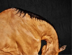 Barla Neck, Horse Series, Large Archival Pigment Print