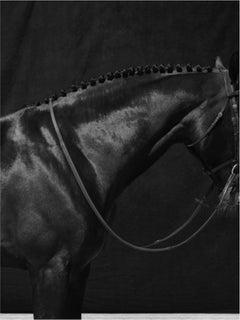 Brainpower Curve II, Horses Series, Large Archival Pigment Print