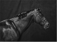 Brainpower Head II, Horse Series, Large Archival Pigment Print