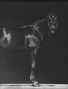 Brainpower I, Horse Series, Small Archival Pigment Print