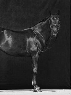 Brainpower I, Horses Series, Large Archival Pigment Print
