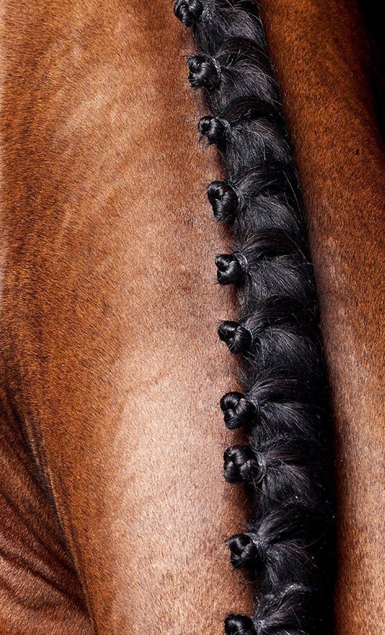 Lamerick Neck, Horse Series, Large Archival Pigment Print - Black Portrait Photograph by Juan Lamarca