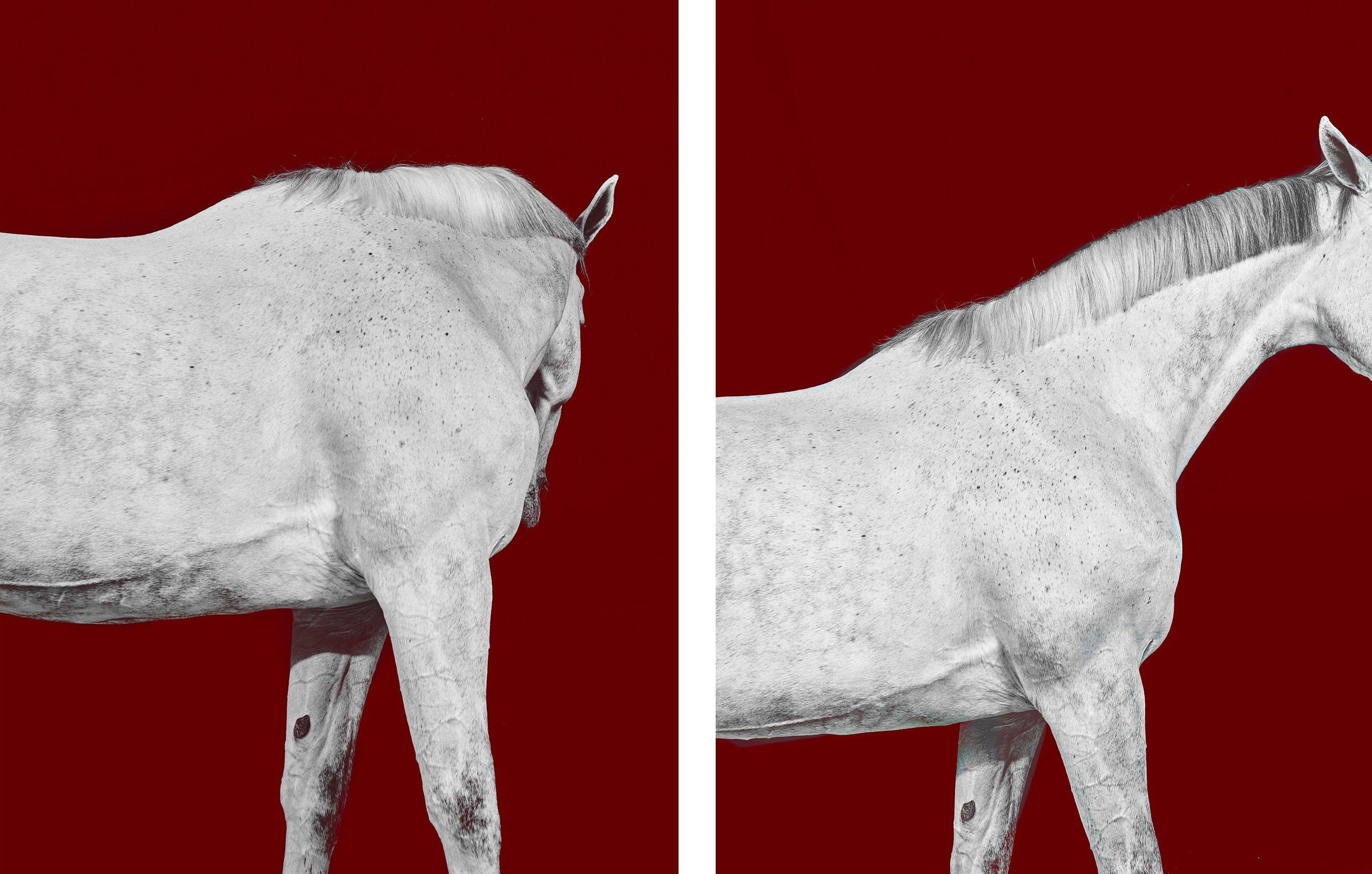 Tixie on Red I and II Diptych, Horse Series, Small Archival Pigment Print