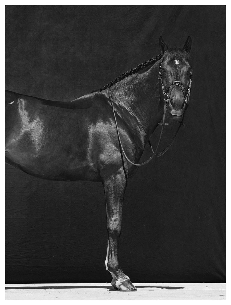 Tixie on Red I & II, Brainpower (Triptych), Horse Series, Archival Pigment Print - Contemporary Photograph by Juan Lamarca