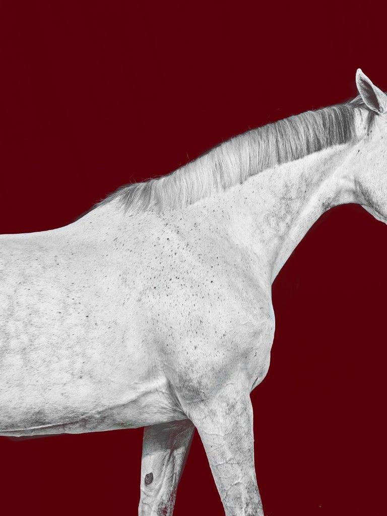 Tixie on Red I & II, Brainpower (Triptych), Horse Series, Archival Pigment Print - Black Portrait Photograph by Juan Lamarca