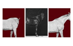 Tixie on Red I & II, Brainpower (Triptych), Horse Series, Archival Pigment Print