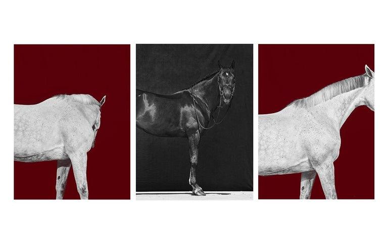 Juan Lamarca Portrait Photograph - Tixie on Red I & II, Brainpower (Triptych), Horse Series, Archival Pigment Print