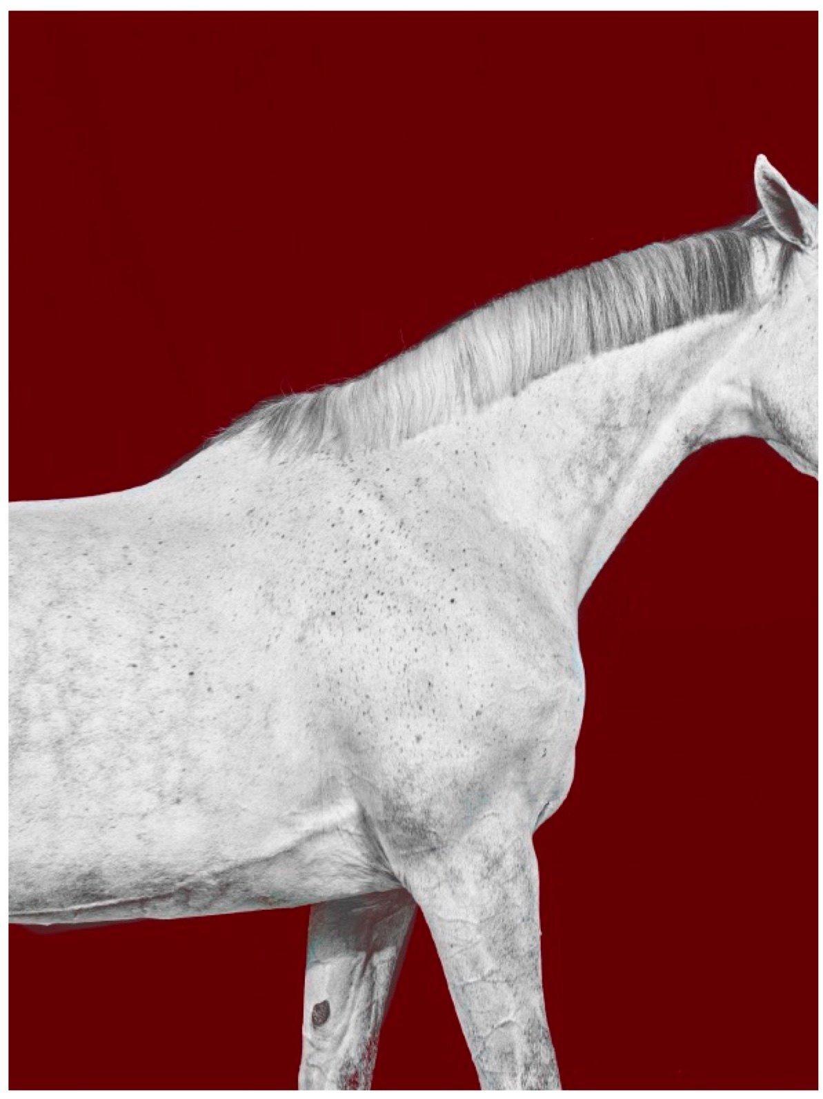 Tixie on Red I, Horse Series, Medium Archival Pigment Print, Framed