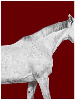 Tixie on Red I, Horse Series, Medium Archival Pigment Print, Framed