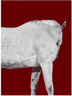 Tixie on Red I, Horse Portraits series Color Photograph (Medium Size) FRAMED
