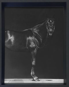 Brainpower I, Horses Series, Extra Small Archival Pigment Print, Framed