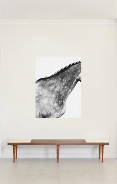 Volvan Neck II, Horse Series, Medium Archival Pigment Print