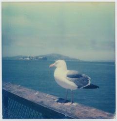 Alcatraz Seagull - Contemporary, Polaroid, 21st Century, Photography