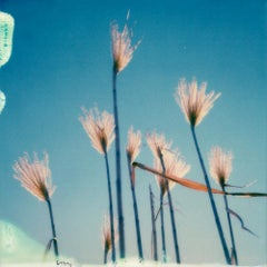 All That Matters - Contemporary, Polaroid, 21st Century, Photography, Landscape