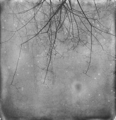 And also the Trees - 21st Century, Polaroid, Landscape Photography, Contemporary