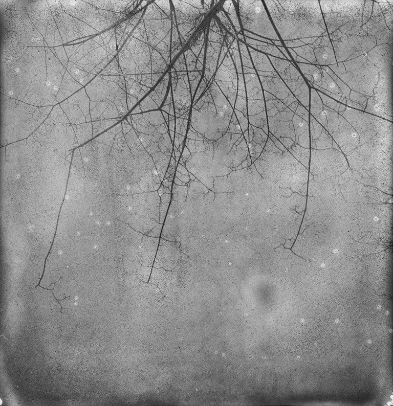 Julia Beyer Landscape Photograph - And also the Trees