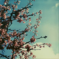 Cherry Blossom Skies III - Contemporary, Polaroid, 21st Century, Photography