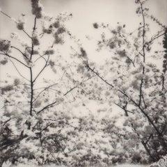 Cherry Blossom Skies IV - Polaroid, Contemporary, Landscape, 21st Century
