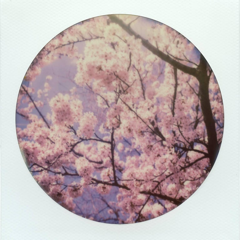 Julia Beyer Landscape Photograph - Cherry Blossoms IV - Polaroid, Contemporary, 21st Century