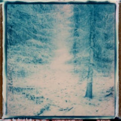 Forest Musings - Contemporary, Polaroid, Photography, Landscape, Color