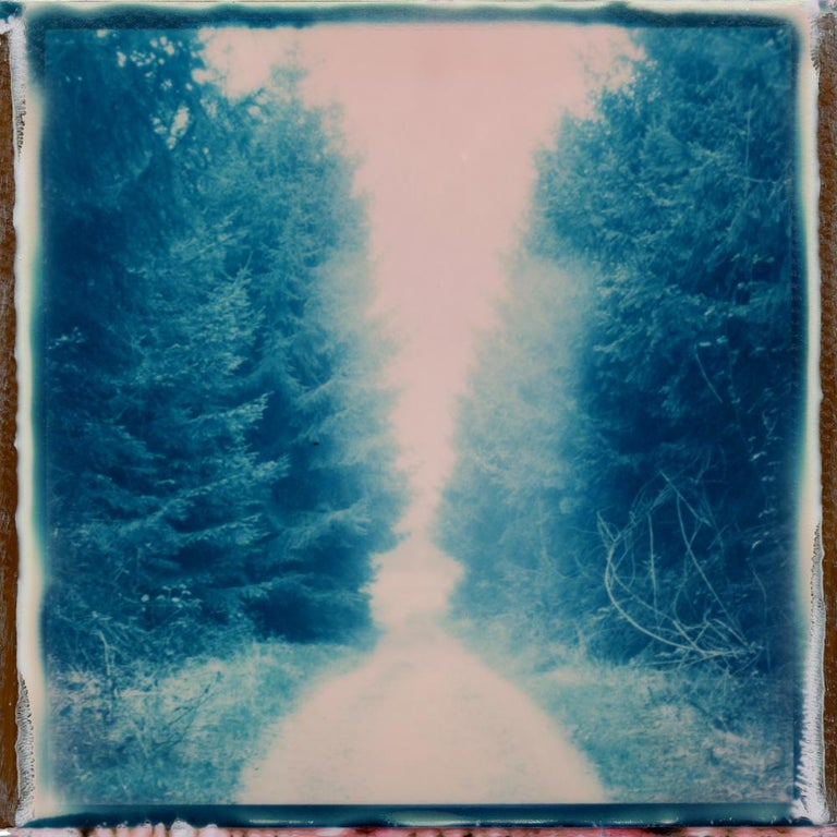 Julia Beyer Color Photograph - Forest Walk - Polaroid, Contemporary, Landscape, 21st Century