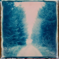 Forest Walk - Polaroid, Contemporary, Landscape, 21st Century