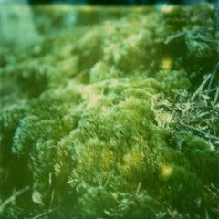 More Moss - Contemporary, Polaroid, 21st Century, Photography, Landscape