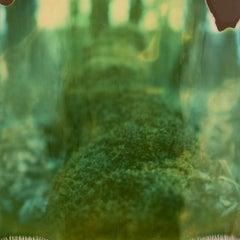 Moss - Contemporary, Polaroid, 21st Century, Photography, Landscape