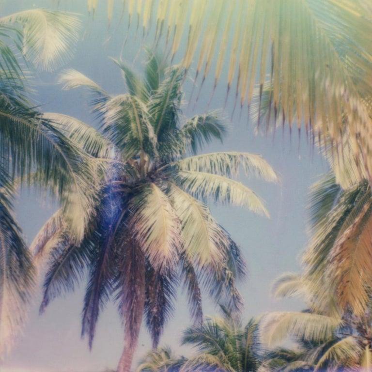 Julia Beyer Color Photograph - Palm Window - Contemporary, Polaroid, 21st Century, Photography, Landscape