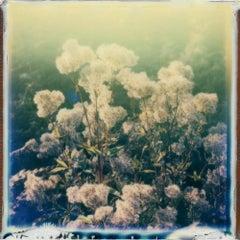 Sleep To Dream - Contemporary, Polaroid, 21st Century, Landscape