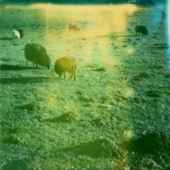 Sungrazing- Contemporary, Polaroid, 21st Century, Photography, Landscape