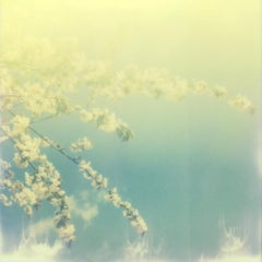 The Sun and the Bloom - Contemporary, Polaroid, Photography, Spring, Color