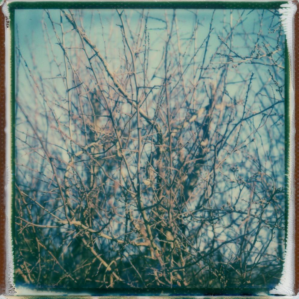 Thorns - Contemporary, Polaroid, 21st Century, Landscape