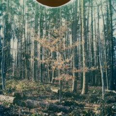 Winter Tree - Contemporary, Polaroid, 21st Century, Photography, Landscape