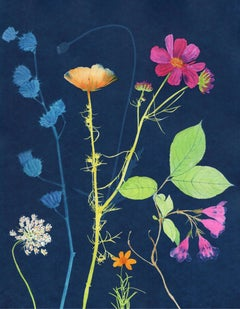 Cosmos, Queen Anne's Lace: Still Life Painting of Flowers on Indigo Blue