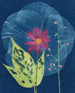 Leaf, Cosmos, Hibiscus: Still Life Cyanotype Painting, Flowers on Indigo Blue