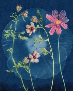 Venice Mallow, Hibiscus: Still Life Cyanotype Painting of Flowers on Indigo Blue