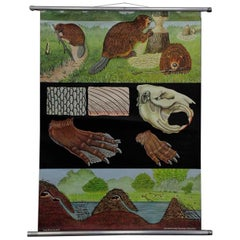 Jung Koch Quentell Vintage Poster Rollable Wall Chart Beavers Life Anatomy