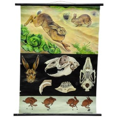 Jung Koch Quentell Wall Chart Poster Animals Brown Hare Common Rabbit