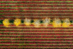Kacper Kowalski, Seasons/Autumn #10, abstract aerial landscape photograph, 2011