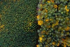 Kacper Kowalski, Seasons/Autumn #28, abstract aerial landscape photograph, 2015