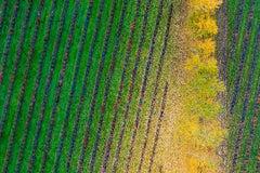Kacper Kowalski, Seasons/Autumn #48, abstract aerial landscape photograph, 2013