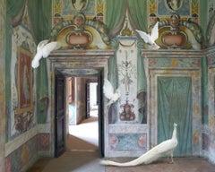 Immaculate Conception, Villa De'este, 2015