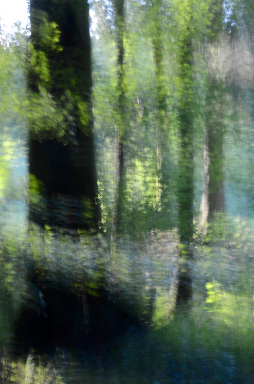 Glades No. 21 , Contemporary Photography