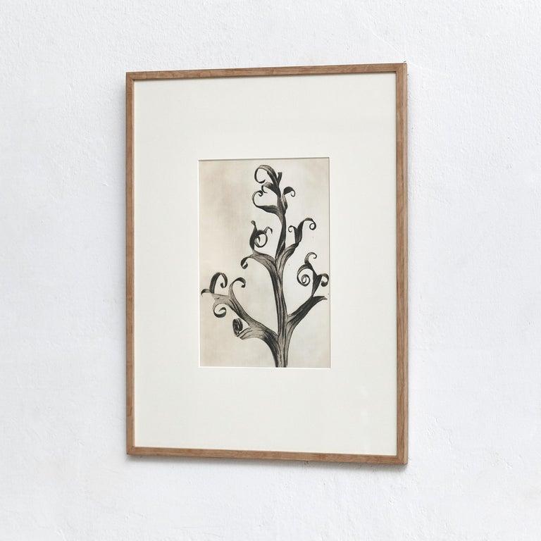 Karl Blossfeldt photogravure from the edition of the book 'Wunder in der Natur' in 1942.  Photography number 3. 'Delphinium. Rittersporn. Teil eines trockenen blattes in 6 facher Vergrößerung.'  In original condition, with minor wear consistent