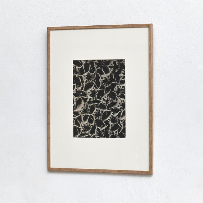 Karl Blossfeldt photogravure from the edition of the book 'Wunder in der Natur' in 1942.  Photography number 34 Ballota acuta. Gottverge. Sonnenkrone in 20 8 facher Vergrößerung.  In original condition, with minor wear consistent with age and
