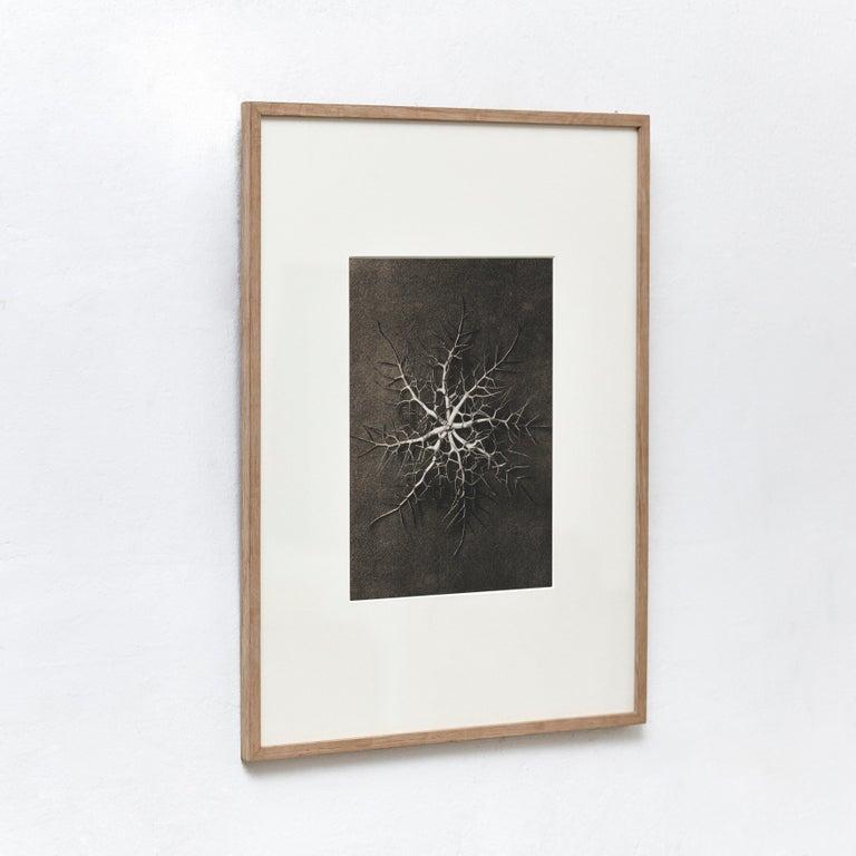 Mid-Century Modern Karl Blossfeldt Black White Flower Photogravure Botanic Photography, 1942 For Sale