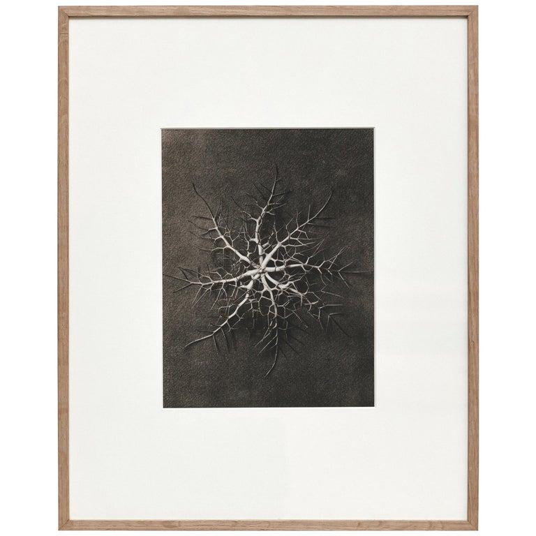 Karl Blossfeldt Black White Flower Photogravure Botanic Photography, 1942 For Sale