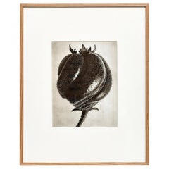 Karl Blossfeldt Black White Flower Photogravure Botanic Photography, 1942