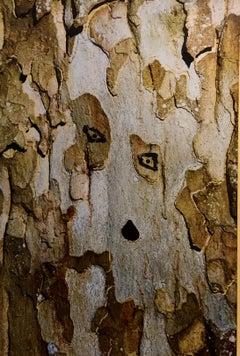 Tree Diva